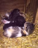 Baby Kittens!